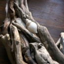 Driftwood Star with Shell